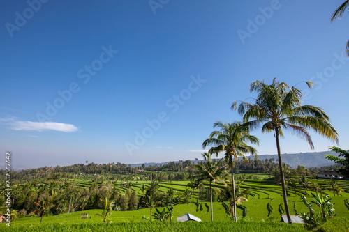 Aluminium Prints Bali Two huts in Lush green Rice tarrace in Sidemen, Bali, Indonesia
