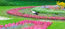Summer Park With Beautiful Flowers . A Stork Walks Against The Background Of A Flower Bed. Wide Photo .