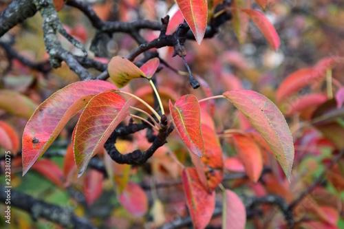 Der Herbst ist ins Land gezogen