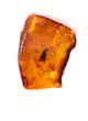 canvas print picture - Amazing piece of Baltic Amber with frozen in it prehistoric fly. Photo isolated on a white background with reflection.