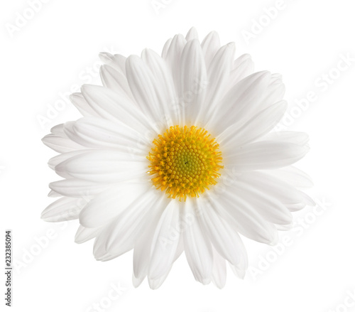 In de dag Madeliefjes Beautiful and delicate chamomile flower on white background