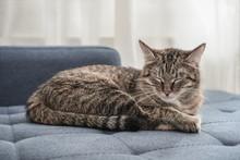 Cute Cat Lying On A Sofa