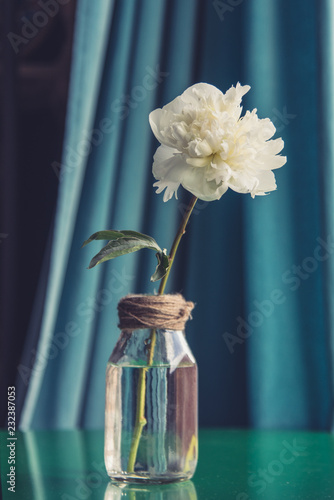 Fotografie, Obraz  Vintage Style Peony in Vase with Blue Velvet Curtain and Green Table