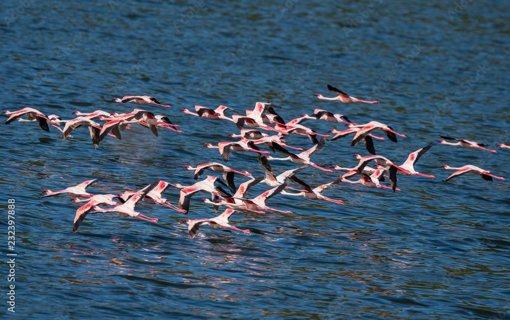 flying flamingo group