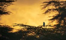 A Bird On Trees In Sunset