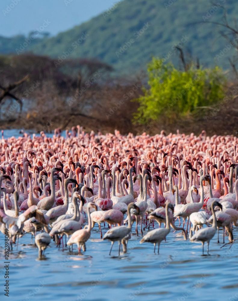 many flamingo in the lake