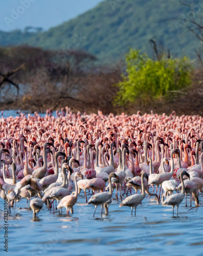 many flamingo in the lake