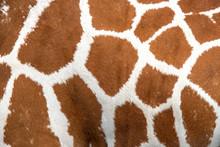 Closeup Giraffe Skin For The B...