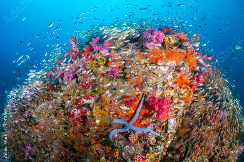 Fototapety, obrazy: Thriving, colorful tropical coral reef, surrounded by tropical fish