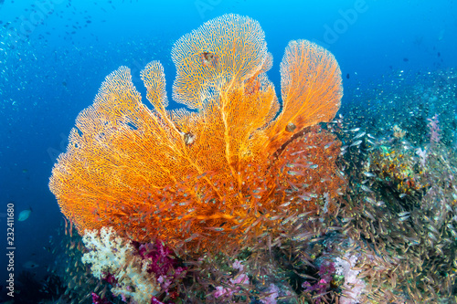 Photo Stands Coral reefs Beautiful and colorful Seafan (Gorgonian Fan coral) on a tropical coral reef