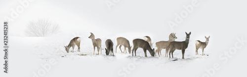 Herd of wild deers isolated in the snow Billede på lærred