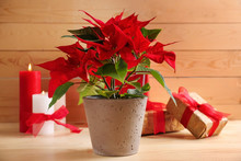 Christmas Flower Poinsettia With Gift Boxes On Wooden Table