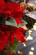 Christmas Flower Poinsettia On Wooden Table, Closeup