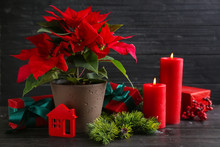 Christmas Flower Poinsettia With Gift Boxes And Burning Candles On Wooden Table
