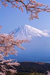Fototapeta桜と富士山と青空