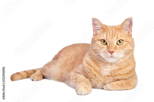 Photo Lying tabby ginger cat isolated on white background.
