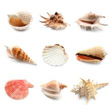 Different Seashells On White Background