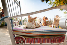 Red White Cat Sits On Pillows On A Chair In A Street Cafe, A Symbol Of Greece