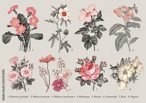 Valokuva Botany