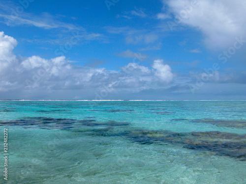 Foto op Aluminium Groene koraal Polynésie française