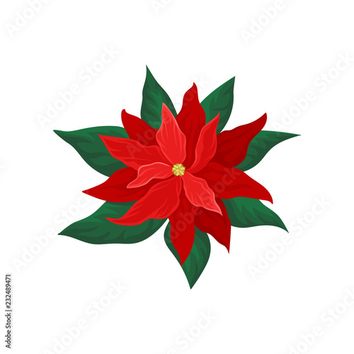 Poinsettia With Bright Red Petals And Green Leaves Beautiful Christmas Flower Nature Theme Flat Vector Icon Buy This Stock Vector And Explore Similar Vectors At Adobe Stock Adobe Stock
