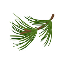 Branch Of Pine Tree With Long Green Needles. Coniferous Twig. Traditional Christmas Plant. Flat Vector Icon