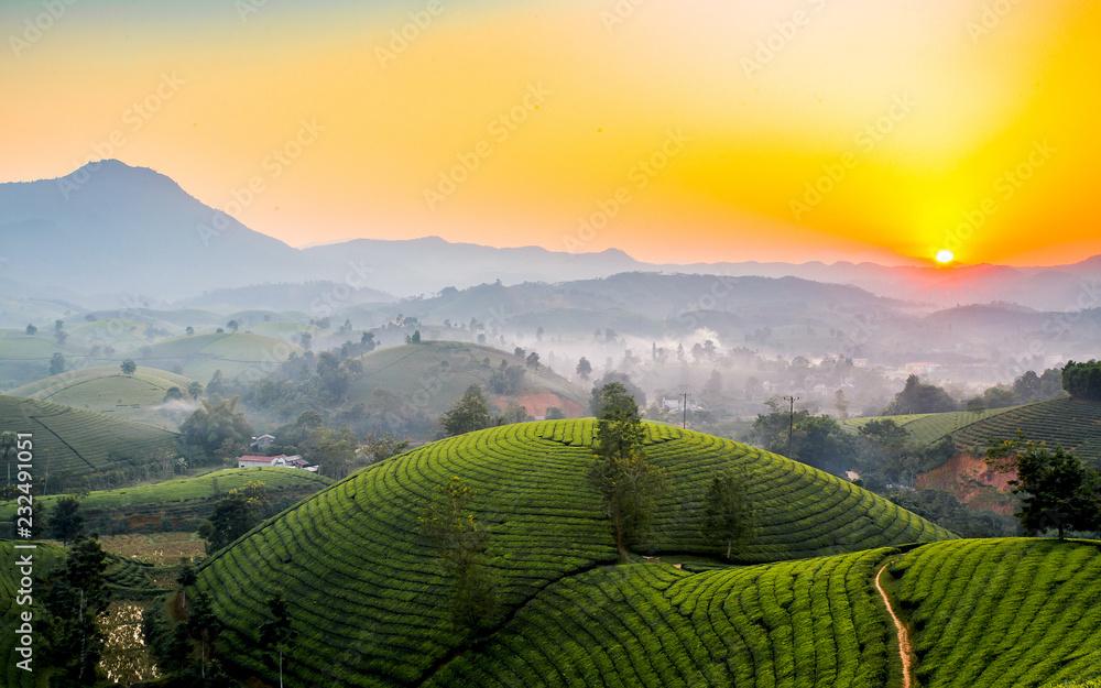 Fototapety, obrazy: Tea hills in Long Coc highland, Phu Tho province in Vietnam