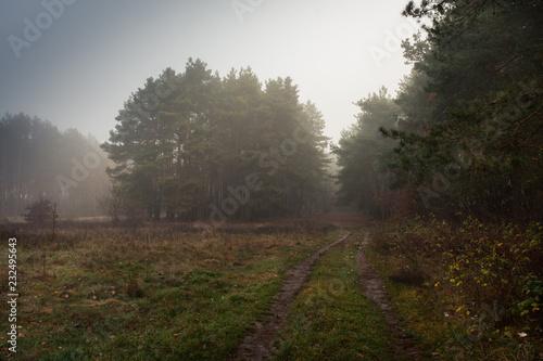 Foto op Plexiglas Weg in bos Droga na skraju lasu