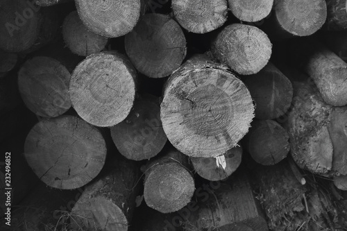 Firewood stacked. Black and white photo