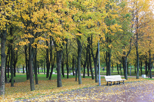 Autumn Park Landscape With Trees And Yellow Leaves And Empty