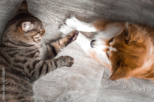 Cat and dog play together. ...