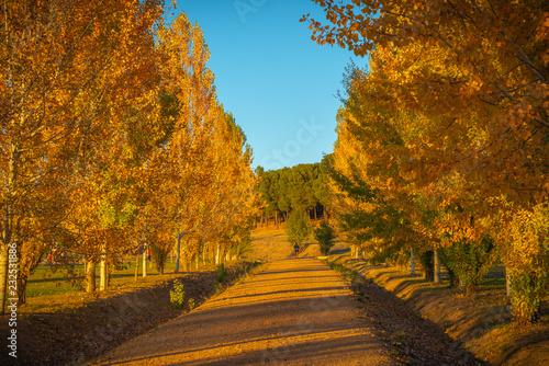 obraz lub plakat Sendero en el bosque de otoño.