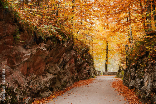 Tuinposter Weg in bos Pathway in autumnal woods