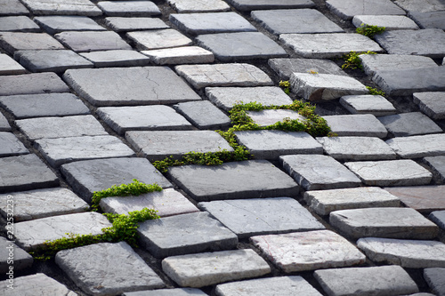 Fotografía  An old stone path with green weeds between the gray stones
