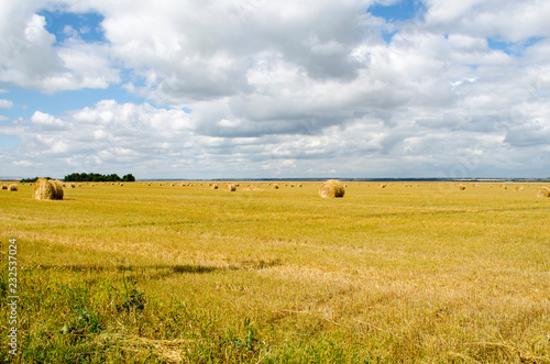 Spoed Foto op Canvas Honing Sloping field of wheat is harvested straw