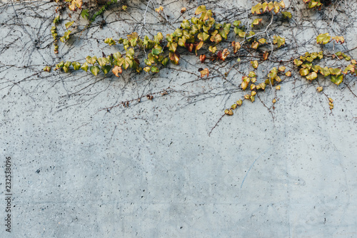 A Concrete Wall With Green Vines On It