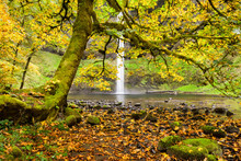 View Of South Falls Through A Moss Covered Tree And Autumn Leaves On The Ground