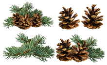 Green Fir Branch With Cone On White Background With Clipping Pass