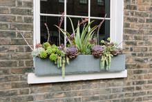 Windowsill Box Succulent Garde...
