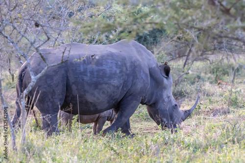 Foto op Plexiglas Neushoorn Nashorn 13