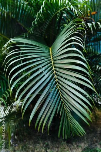 Deurstickers Havana Large, green frond