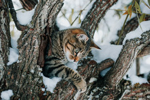 Striped Kitten In Tree