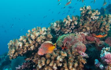 Naklejka na ściany i meble Colorful fish on coral reef