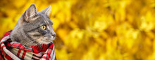 Gray Cat In A Checkered Scarf On Autumn Background Of Yellow Leaves