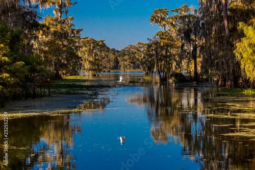Fotografie, Obraz  Cajun Swamp & Lake Martin, near Breaux Bridge and Lafayette Louisiana