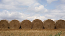 Group Of Round Hay Bales In A Field