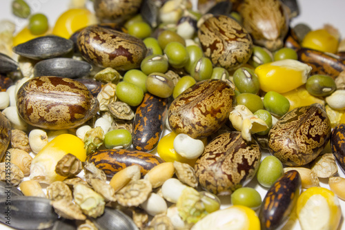 mélange ricin soja haricot mungo maïs lupin Canvas Print