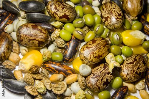 Photo mélange ricin soja haricot mungo maïs lupin