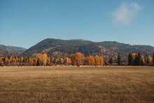 Farm Field With Autumn Trees A...