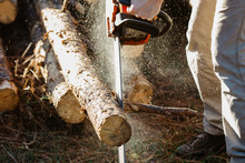 Man Cutting Firewood With Chainsaw.